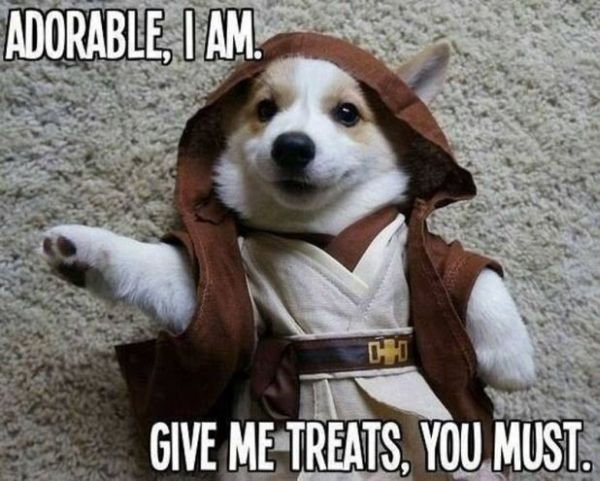 Adorable Jedi - Dog humor