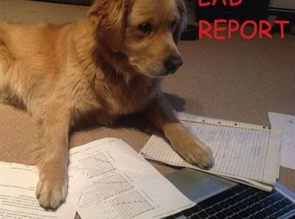 Lab Report - Dog humor