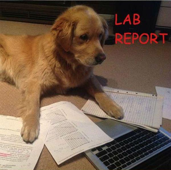 Lab Report - Dog humor