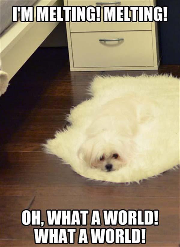 Melting Dog - Fog humor