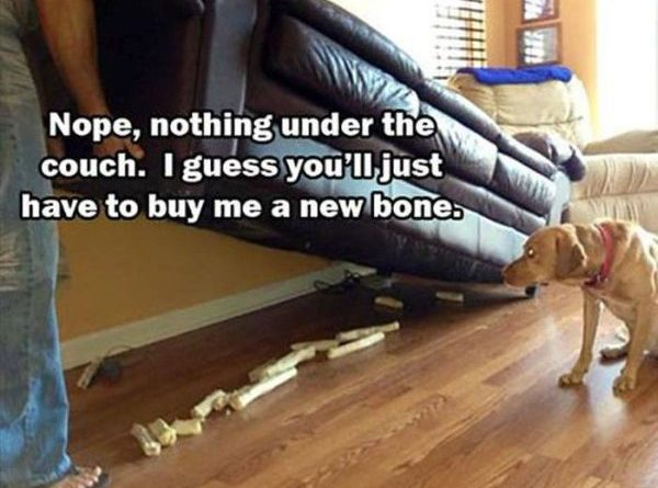 Nope, Nothing Under The Couch - Dog humor