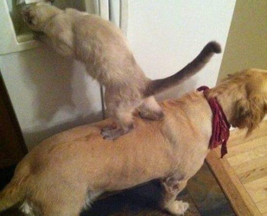 Partners In Crime - Dog humor