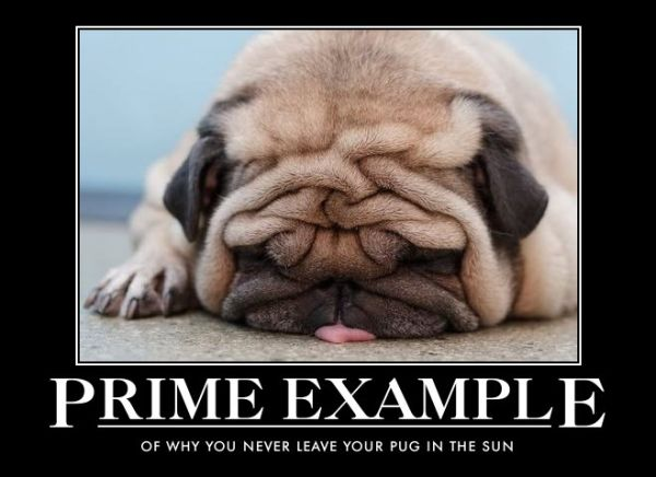 Prime Example - Dog humor