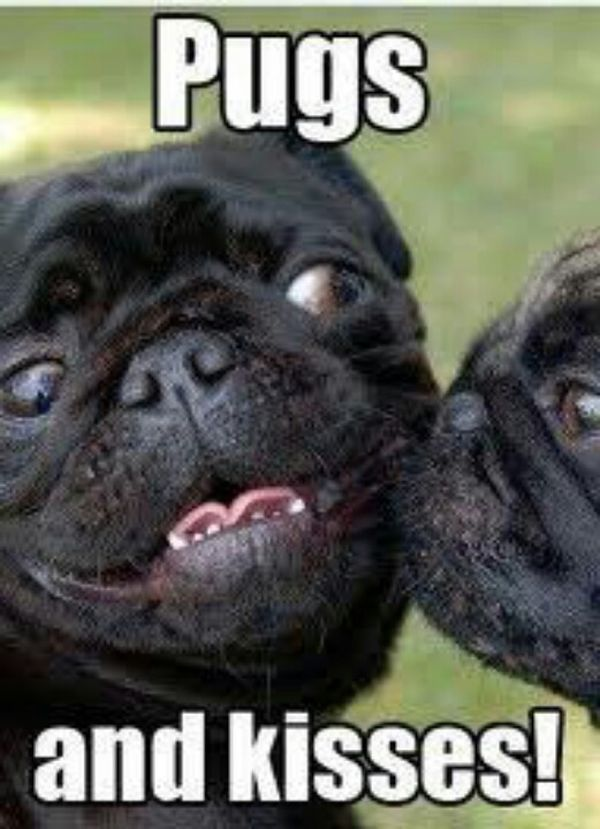 Pugs And Kisses - Dog humor