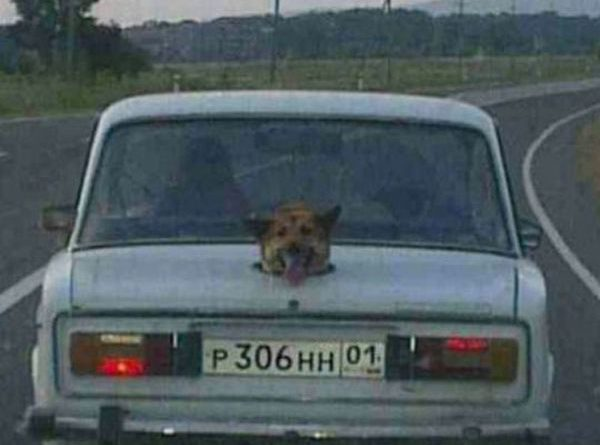 Russian R2D2 - Dog humor