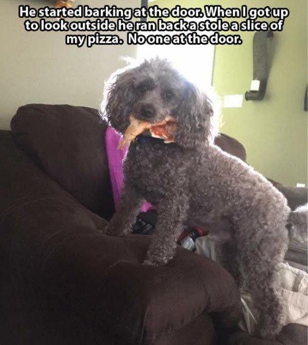 Smart Doggy - Dog humor