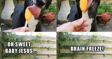 So Good... - Dog humor