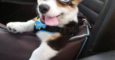 Sup Ladies? - Dog humor