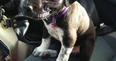 Terminator Puppy - Dog humor