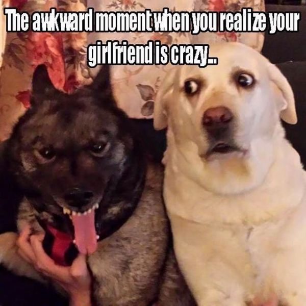 That Awkward Moment When - Dog humor