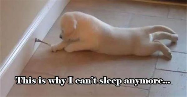 Why I Can't Sleep - Dog humor