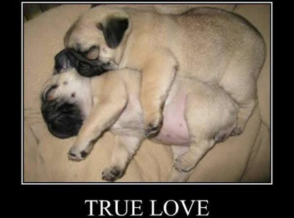 True Love - Dog humor