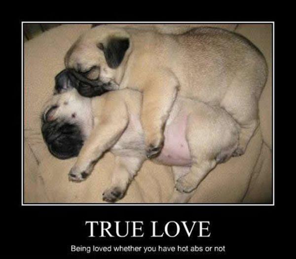 True Love - Dog humor