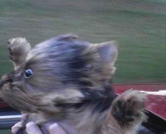Weeeeee! - Dog humor