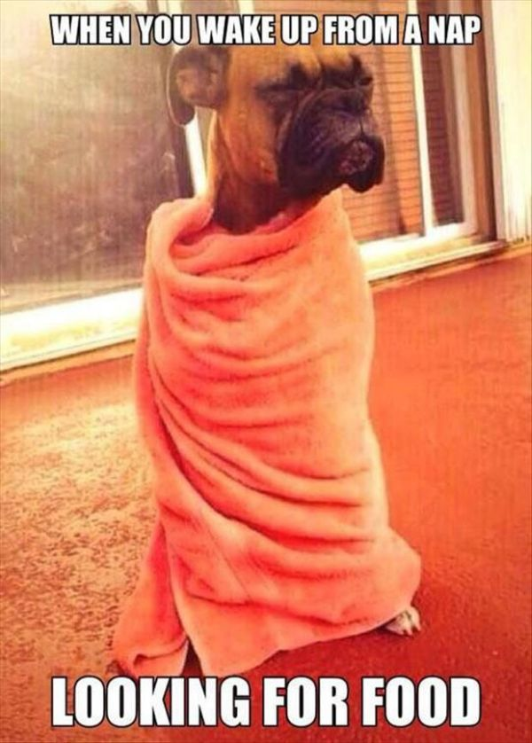 When You Wake Up From A Nap - Dog humor