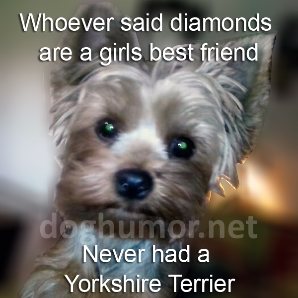 Whoever Said Diamonds Are a Girls Best Friend - Dog humor
