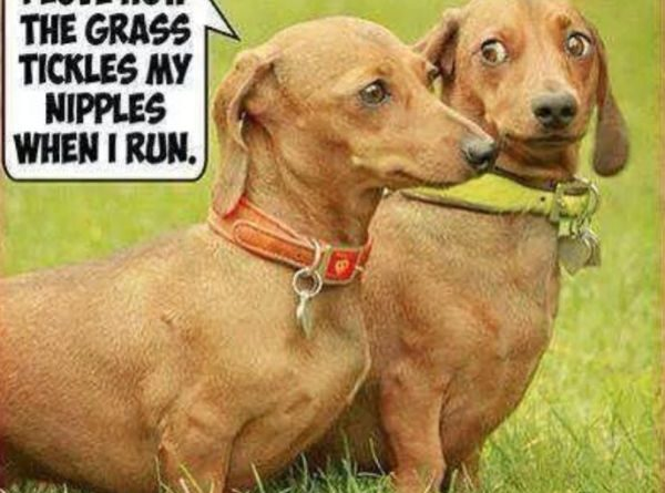 Why I Love Running In The Grass - Dog humor