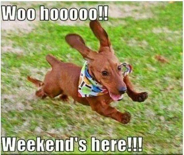 Woo Hoooooo! - Dog humor