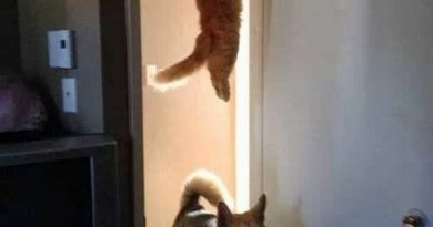 You Guys See The Cat Run Past Here? - Dog humor