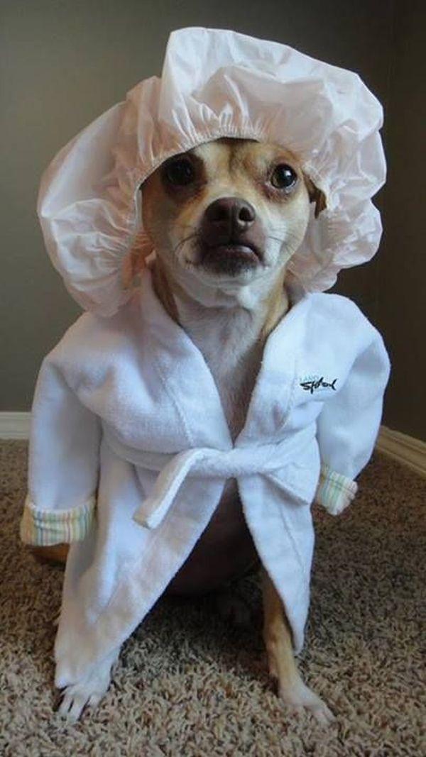 Bath Time - Dog humor