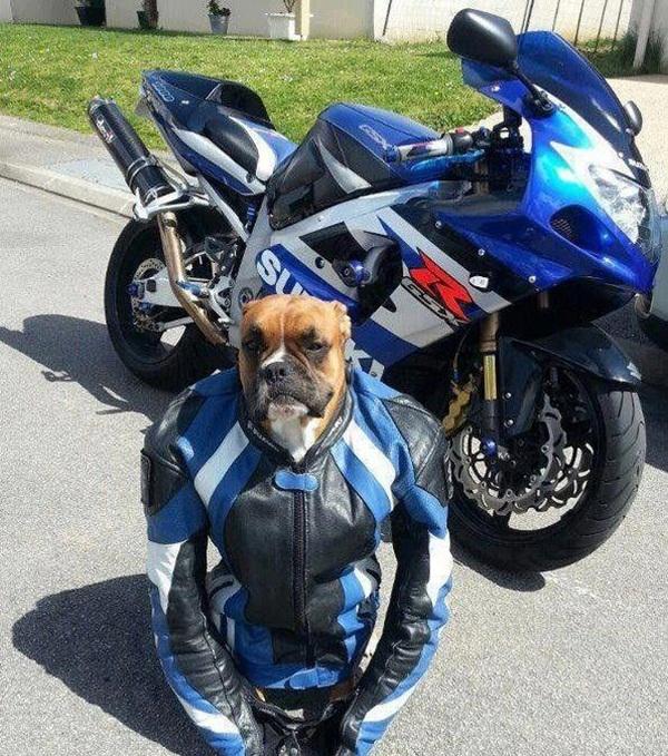 Biker - Dog humor