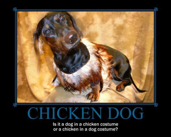 Chicken Dog - Dog humor