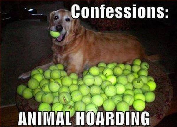 Confessions - Dog humor