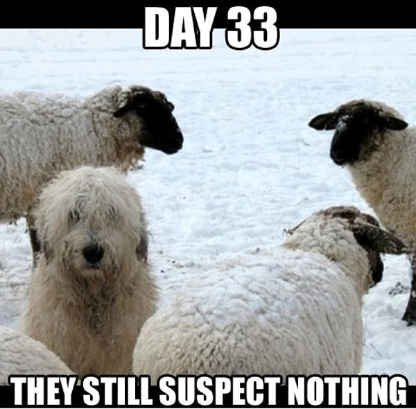 Day 33 They Still Suspect Nothing - Dog humor