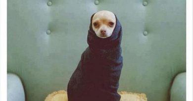 New Dog Fashion Magazine - Dog humor