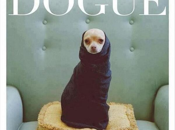 New Dog Fashion Magazine - Dog humor