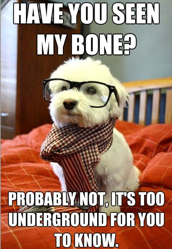 Have You Seen My Bone? - Dog humor