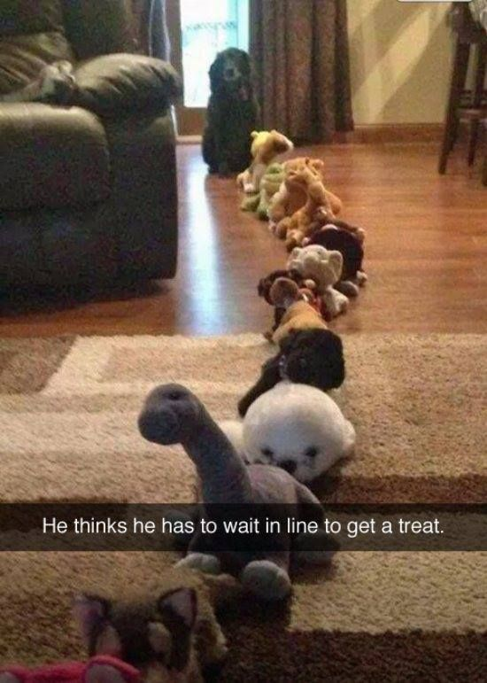 He thinks he has to wait in line to get a treat - Dog humor