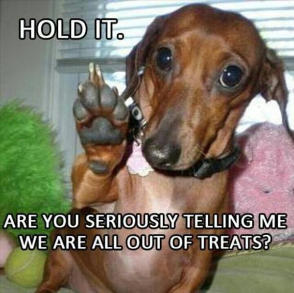 Hold It! - Dog humor