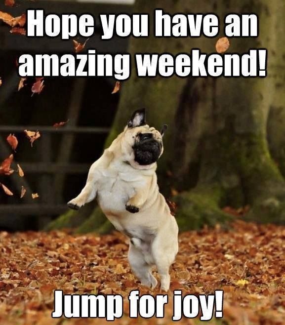 Hope you have an amazing weekend! - Dog humor