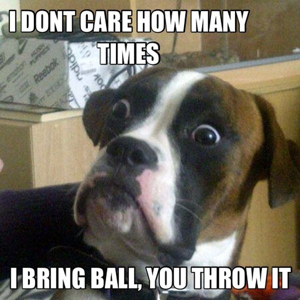 I Don't Care How Many Times... - Dog humor
