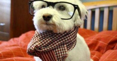 I Love Dog Whistles - Dog humor