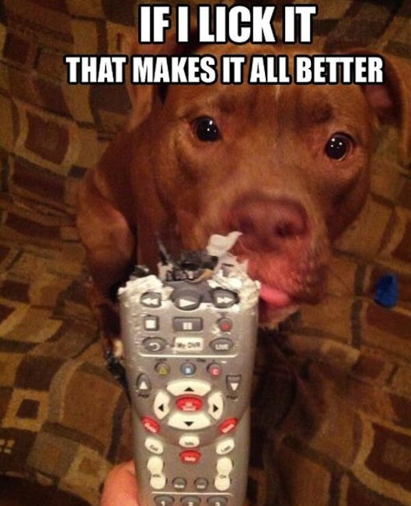 If I Lick It - Dog humor