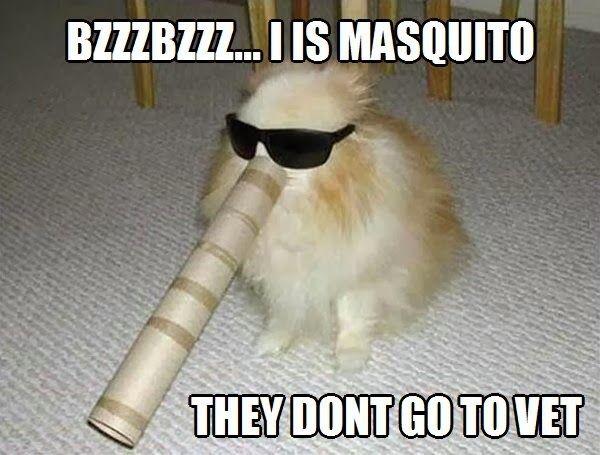 I'm Mosquito - Dog humor