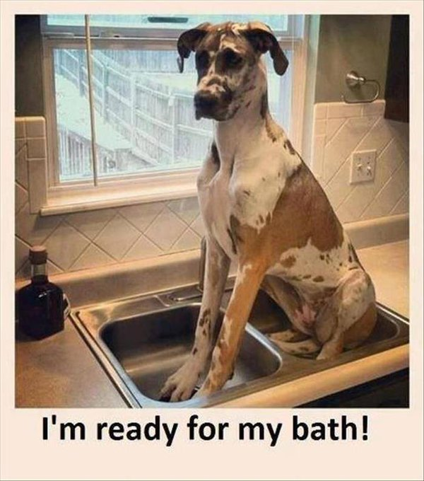 I'm Ready For Bath - Dog humor