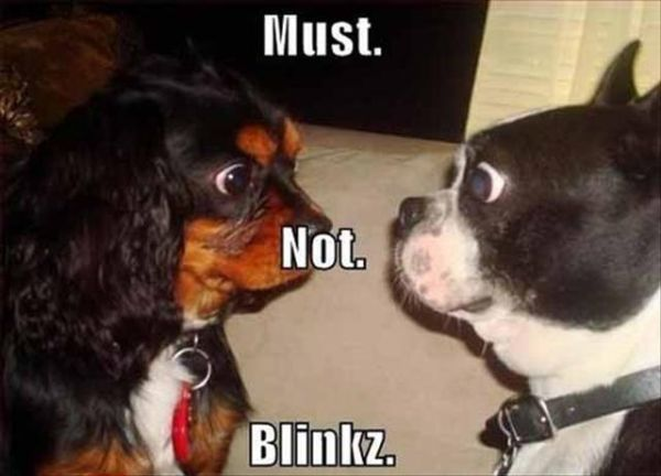 Must Not... - Dog humor