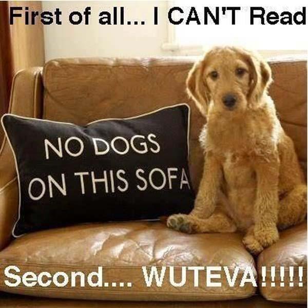No Dogs On Sofa - Dog humor