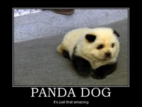 Panda Dog - Dog humor