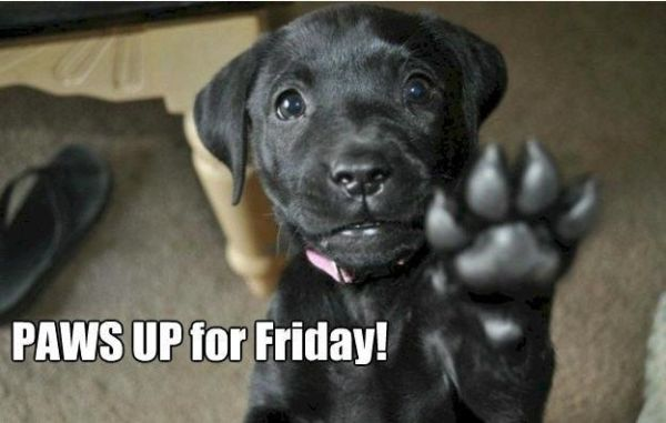 Paws Up For Friday - Dog humor
