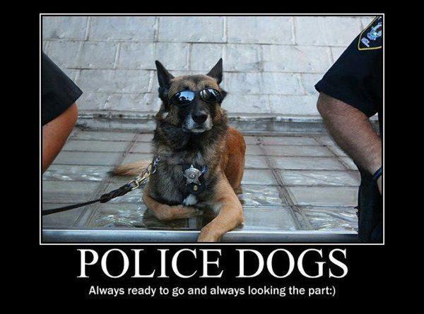 Police Dogs - Dog humor