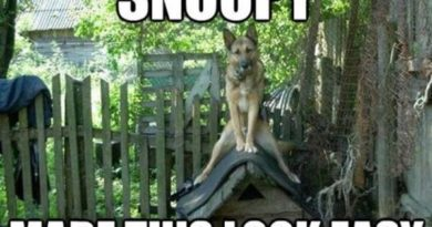 Snoopy Made This Look Easy - DOg humor