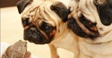 So You're Saying If I Kiss You... - Dog humor