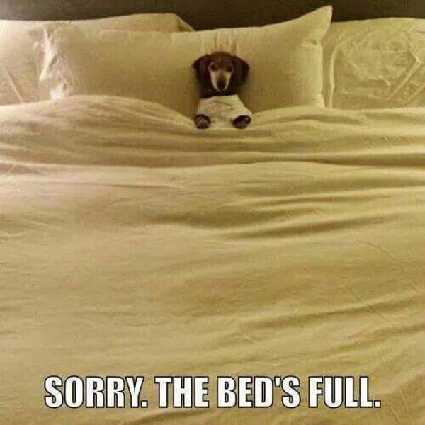 Sorry! - Dog humor