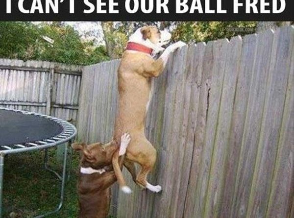 Teamwork - Dog humor