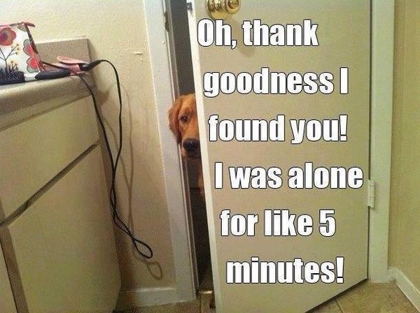 Oh, Thank Goodness I Found You! - Dog humor
