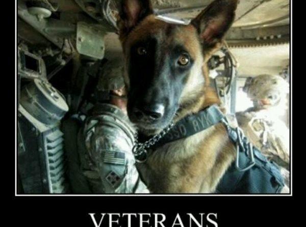 Veterans - Dog humor